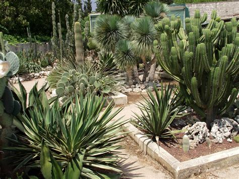 piante giardino roccioso giardino roccioso la cutura giardino botanico