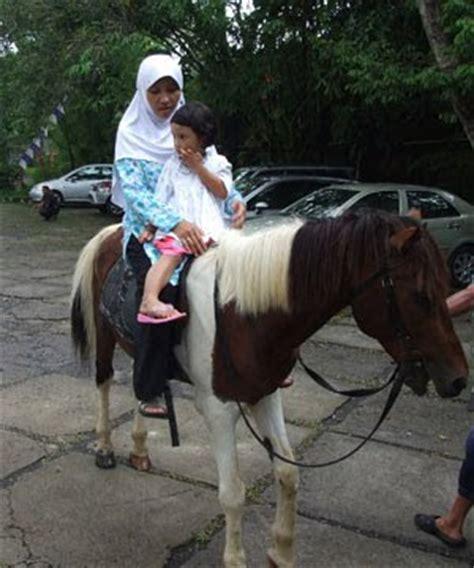 kuda dan beberapa koleksi gambar kuda gambar hidup