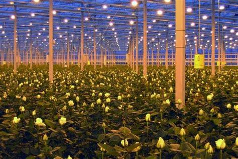 eclairage serre horticole 201 lectrotechnique et 233 clairage pour l horticulture sous