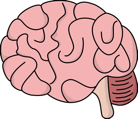 brain clipart brain clipart clipground