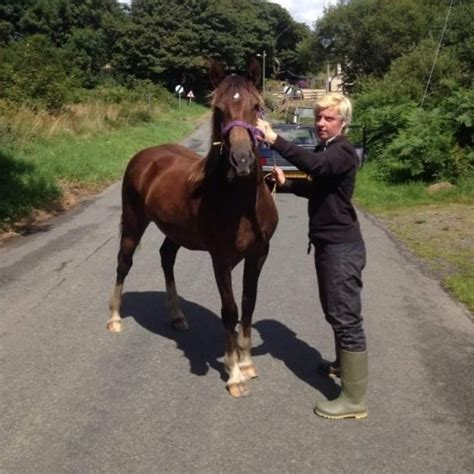 welsh section d foals for sale welsh cob section d haverfordwest pembrokeshire