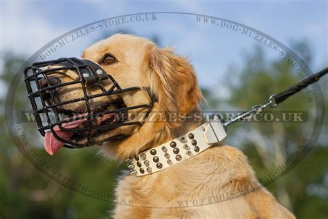golden retriever muzzle basket muzzle rubber covered winter muzzle bestseller wire muzzle rubber