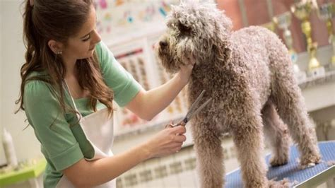 sedative for grooming how to sedate a for nail clipping and grooming