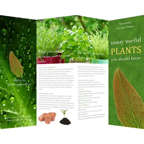 plant layout maker online brochure templates sles brochure maker publisher plus