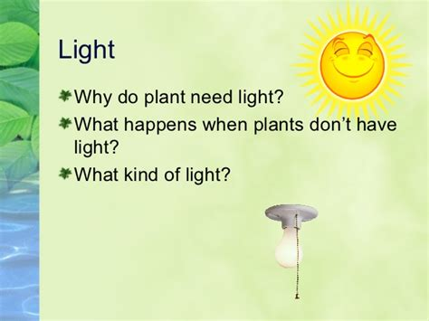 what of light do plants need what do plants need