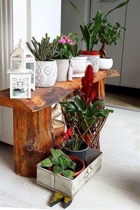 dress   home   indoor plants  dont