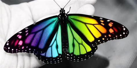 imagenes de kitty mariposa 191 c 243 mo surgen los dise 241 os y colores en las alas de las