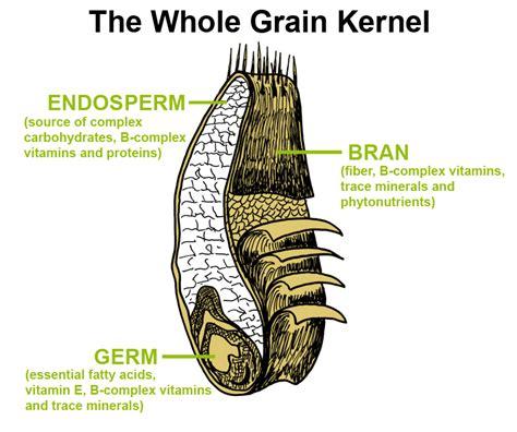 whole grain kernel parts whole grain concentrates formula iv 174 formula iv plus