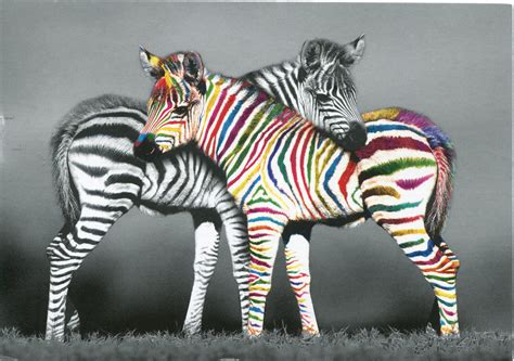 what color is a zebra zebra of a different color remembering letters and postcards