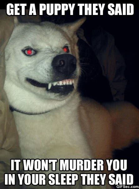 evil puppy meme evil puppy jpg