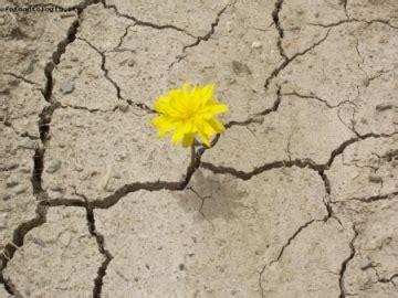 fiore nel deserto allucinazioni l oasi