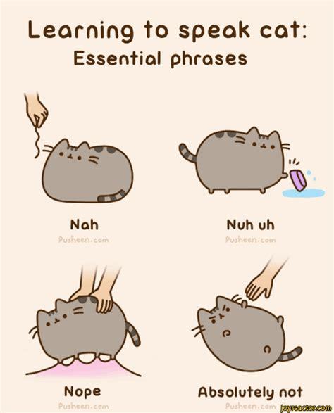 Cartoon Cat Memes - learn to speak cat pusheen cat language comics