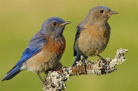 birds of north america land trust bird conservation