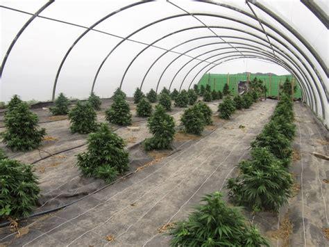 Canapé En by La Planta De Cannabis