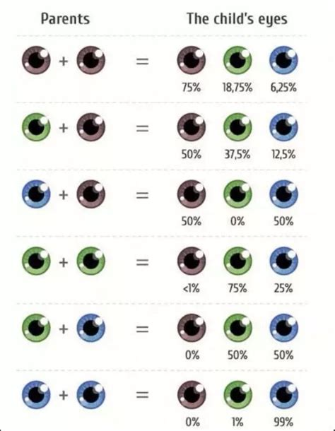 eye color gene probability chart writing