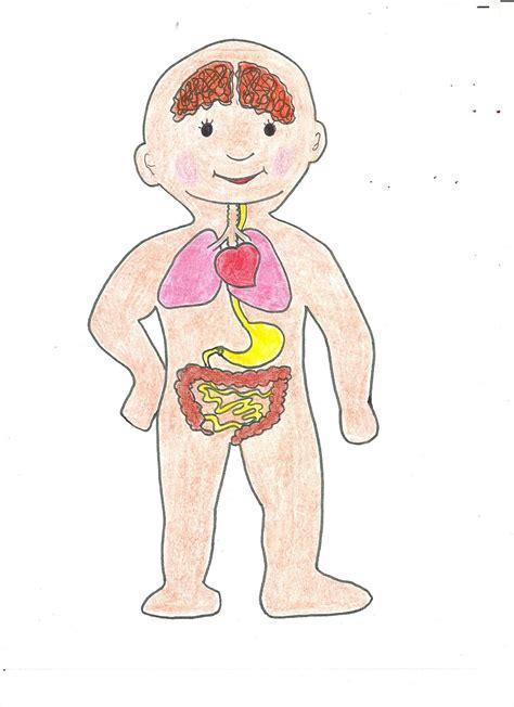 imagenes asombrosas del cuerpo humano dibujo organos internos del cuerpo humano para ni 241 os imagui
