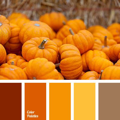 pumpkin color bright orange color of pumpkin color palette for