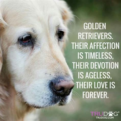 golden retrievals poem 586 best images about golden retriever quotes on the golden golden rule