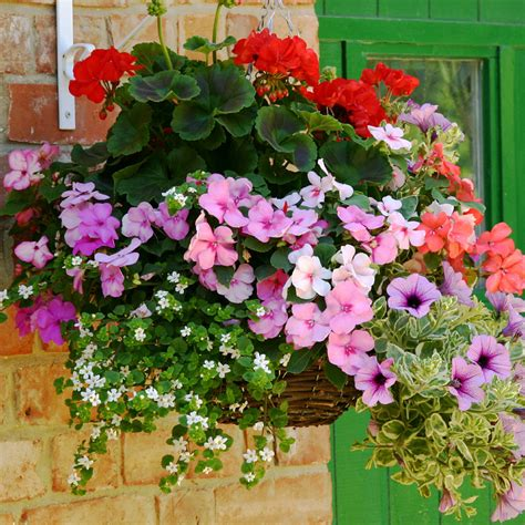 hanging baskets of flowers close x thank you bonza basket offer added to your basket flowers