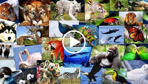 imagenes de animales de mexico animales en peligro de extincion en mexico 2016 especies