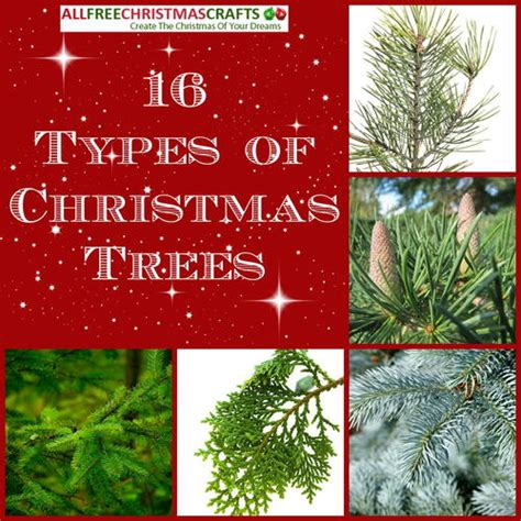 16 types of christmas trees allfreechristmascrafts com