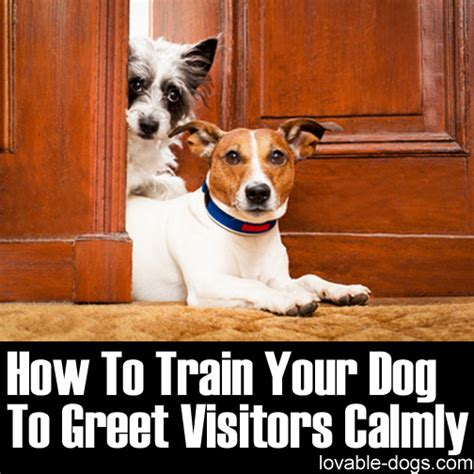 how to train your dog to go to the bathroom lovable dogs how to train your dog to greet visitors calmly lovable dogs