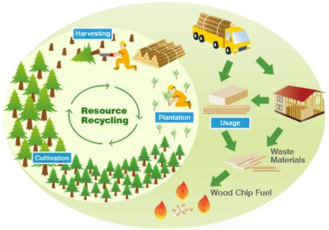 Forest Resources Essay by The Importance Of Forest Management In The Uk Mersey Valley Golf Club