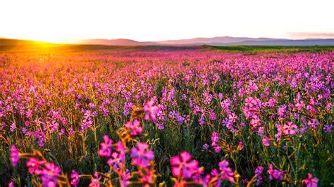 Landscape Pictures With Flowers Flowers Landscape Nature Hd 4k Wallpapers
