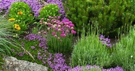fragrant bedding plants low growing bedding plants outdoor areas the rock