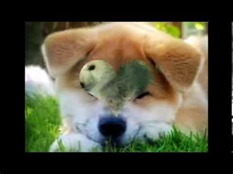 imagenes animales mas tiernos los animales mas tiernos del mundo youtube