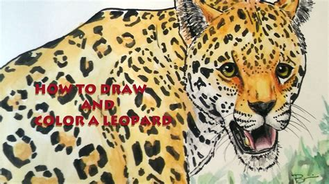 leopard color how to draw and color a leopard