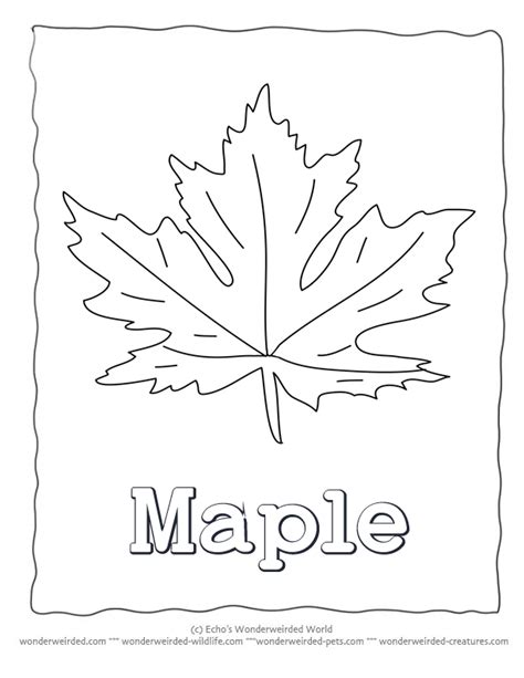printable maple leaves coloring pages maple leaf coloring page our leaf coloring page