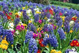 image of spring flowers reubens lawn care how to plant spring flower bulbs