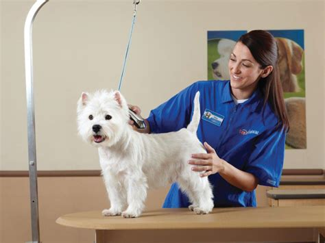 Pets Mat by Petsmart Careers Employmenthub