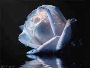 imagenes de rosas sobre agua gifs animados de rosas blancas gifmania