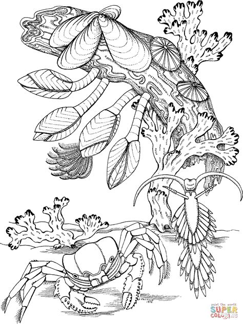 great barrier reef free colouring pages