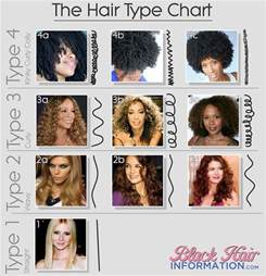 different types of hair color for americans 17 best ideas about hair type chart on pinterest natural