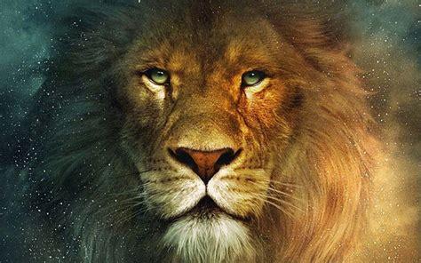 imagenes full hd de leones fondo pantalla cabeza le 243 n