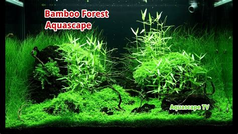 aquascape forest style bamboo forest aquascape asian style aquascape tv youtube