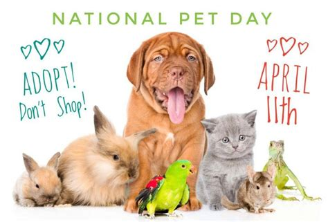 petsmart puppy day 30 petco gift card or paypal giveaway nationalpetday open ww ends 4 22 miss