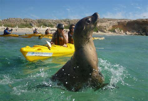 boat tour perth penguin island mandurah canal cruise aussie perth tours