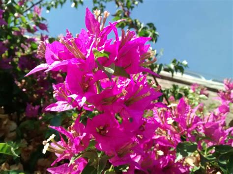 alberi e fiori fiori delle piante grasse foto e consigli creare verde