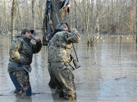 water real tree 10 reasons why you at calling ducks waterfowl