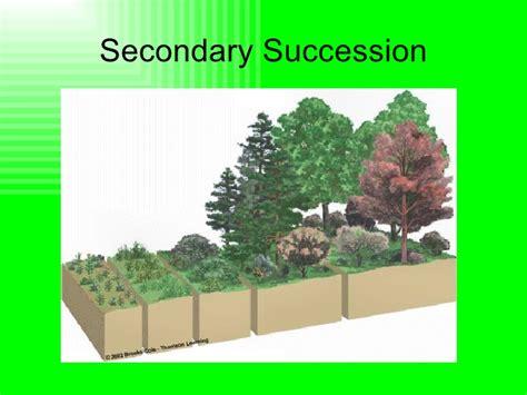 primary and secondary succession venn diagram secondary succession related keywords secondary