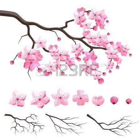 fiori di ciliegio disegno risultati immagini per fiori di ciliegio disegni