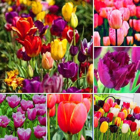 online buy wholesale tulip chair from china tulip chair online buy wholesale tulip bulbs for sale from china tulip