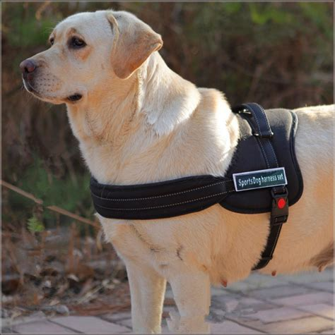 xl dogs aliexpress buy harness s xl large harness padded strong hanress for