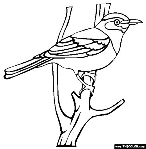 secretary bird coloring page 90 secretary bird coloring page bird pictures to