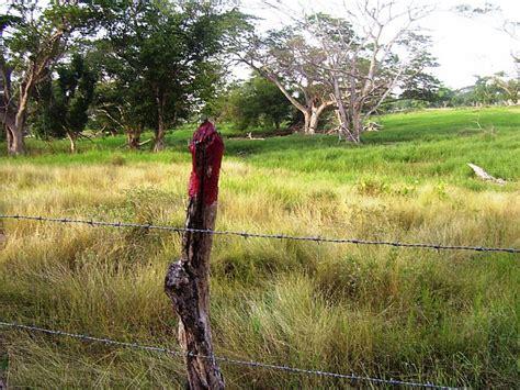 Hv Black Elizabert commercial farm land for sale in black river area st elizabeth jamaica propertyads jamaica