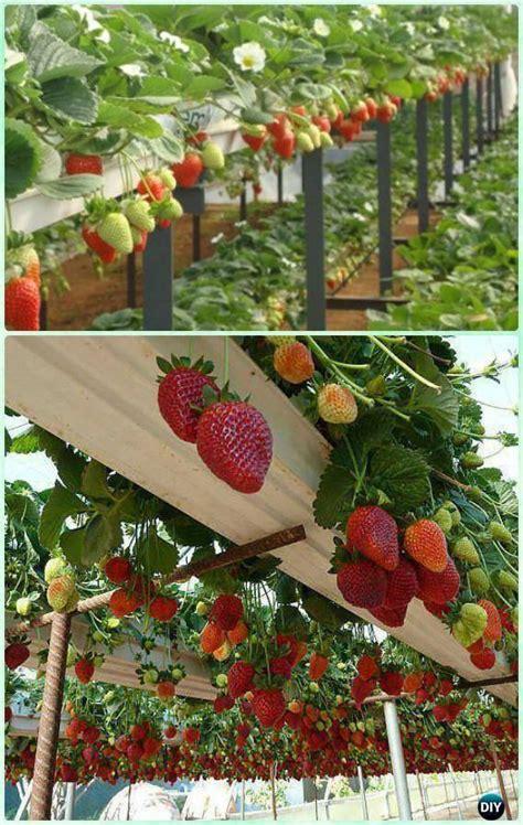 diy vertical garden ideas  indoors  outdoors